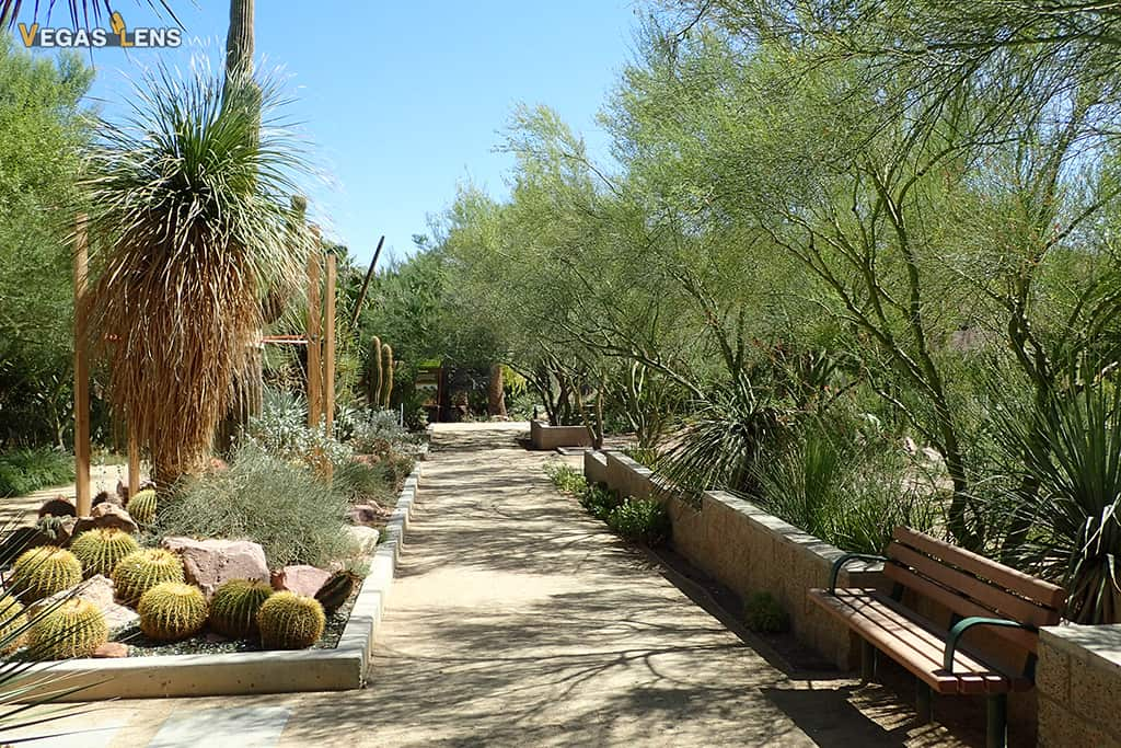 Botanical Cactus Garden - Free things to do in Vegas with kids