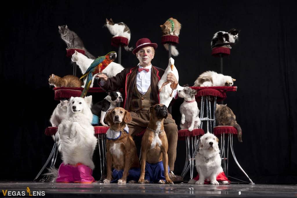 Popovich Comedy Pet Theatre - Las Vegas family shows