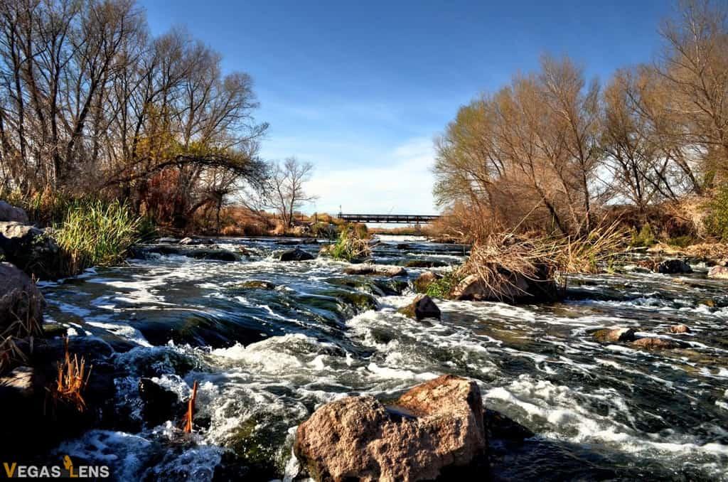 Clark County Wetlands Park - Las Vegas day trips