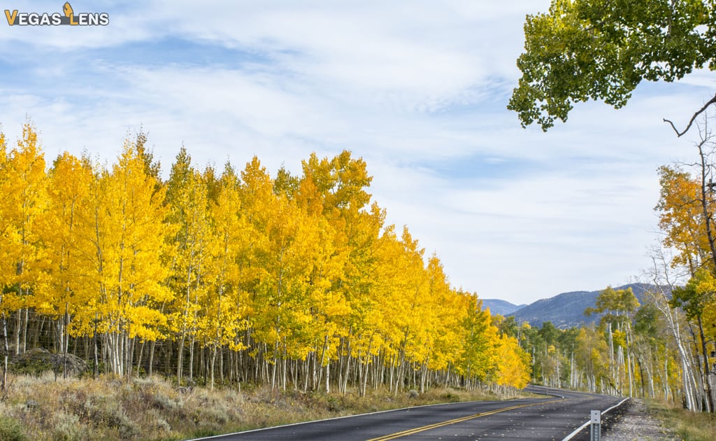 Fish Lake National Forest - Day trip from Las Vegas