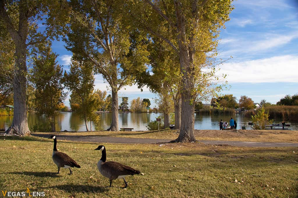 Floyd Lamb Park - Things to do with Toddlers in Las Vegas