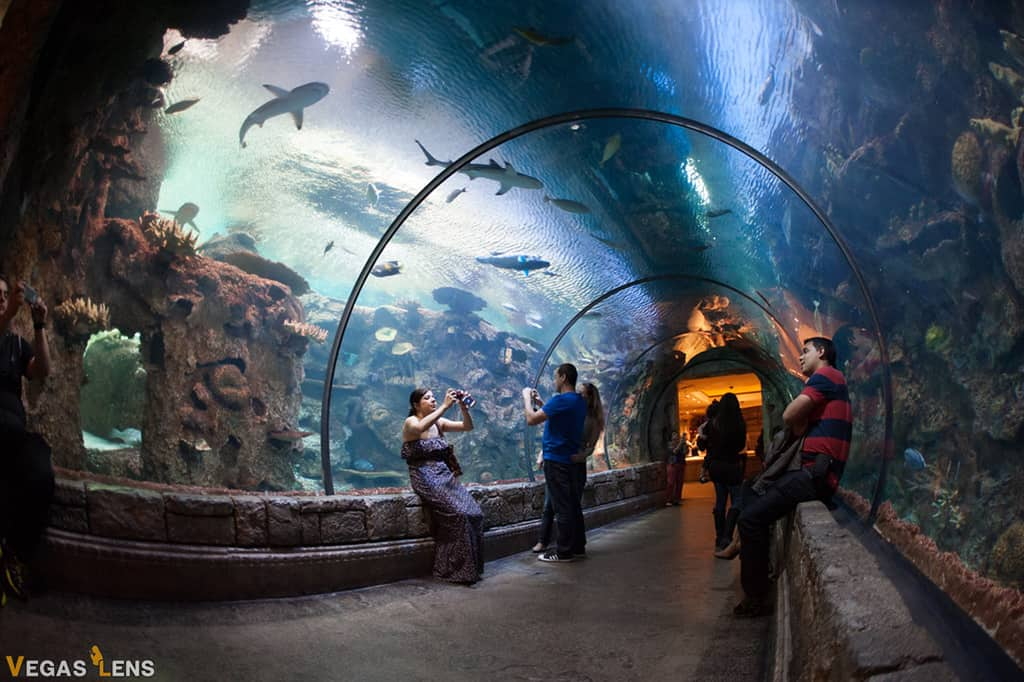 Shark Reef Aquarium - Toddler Activities in Las Vegas