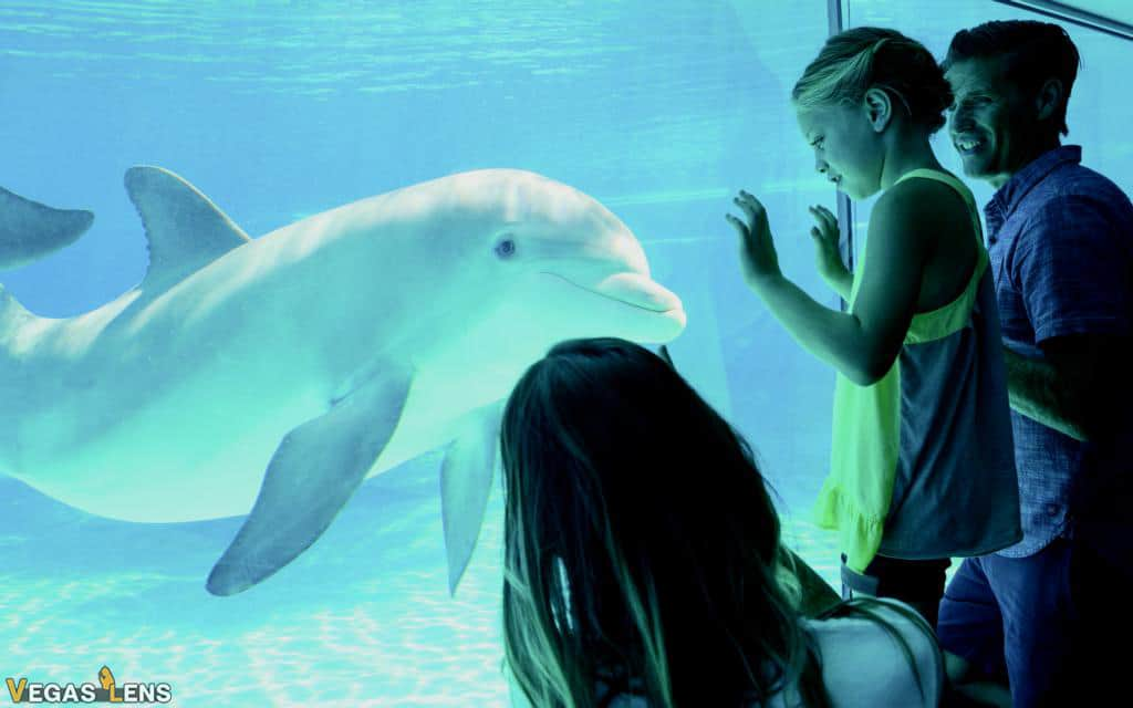Siegfried & Roy's Secret Garden & Dolphin Habitat - Las Vegas with Toddlers