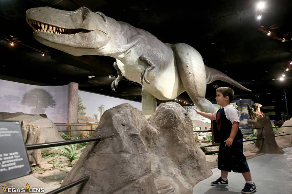 Las Vegas Natural History Museum - Things to do with toddlers in Las Vegas
